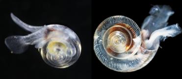 disolving snail shells