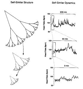 Goldberger et. al. 2002, PNAS, 99, 2466-2472