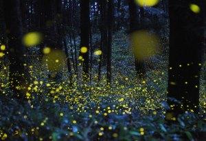 Credit: Tsuneaki Hiramatsu digitalphoto.cocolog-nifty.com