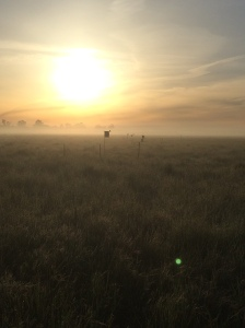 Sunrise over field site in Davis, CA