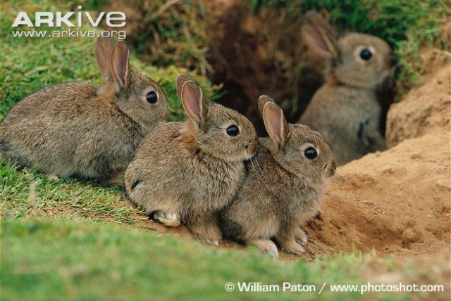 rabbit-kittens-at-burrow-entrance