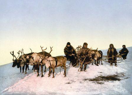 1024px-Archangel_reindeer3