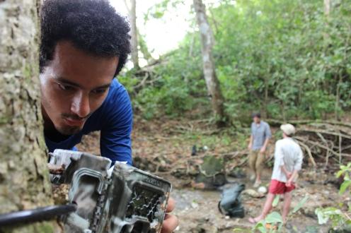 Setting up a camera trap in the forest (PC: Pedro Castillo)