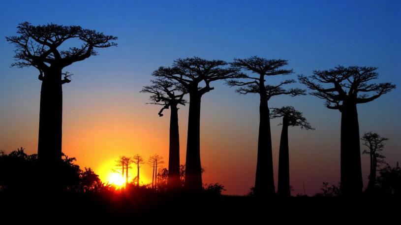 Madagascar_Field