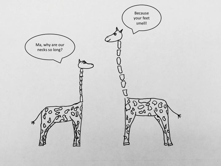 SS_giraffes