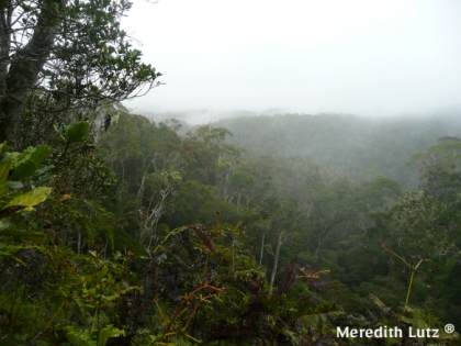 A frequent site in the rainforest - fog and clouds rolling over the mountains