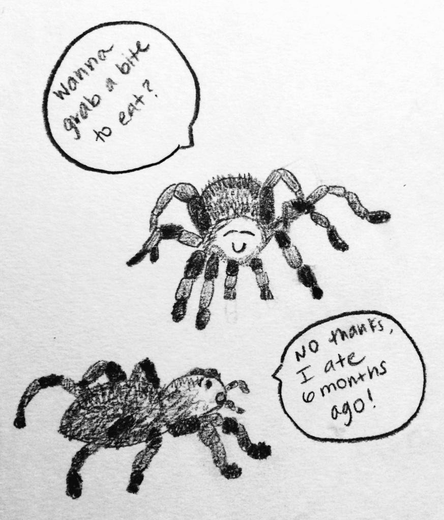 SS_tarantulas
