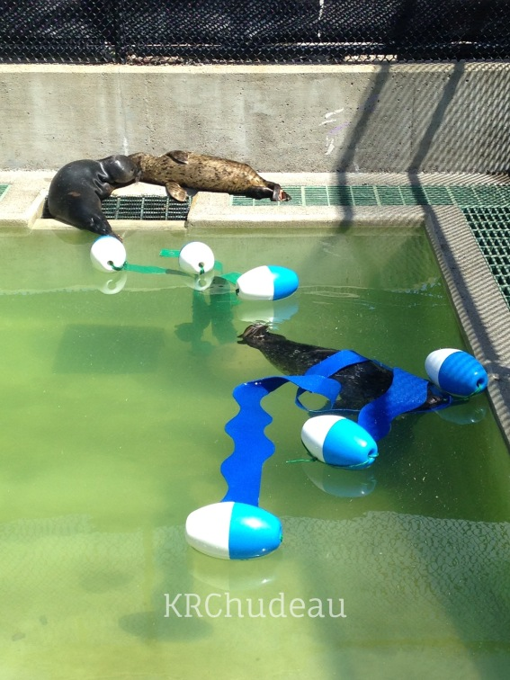 Pups interacting with pontoon enrichment