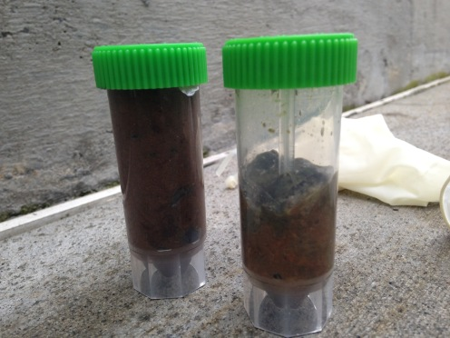 Seal fecal samples