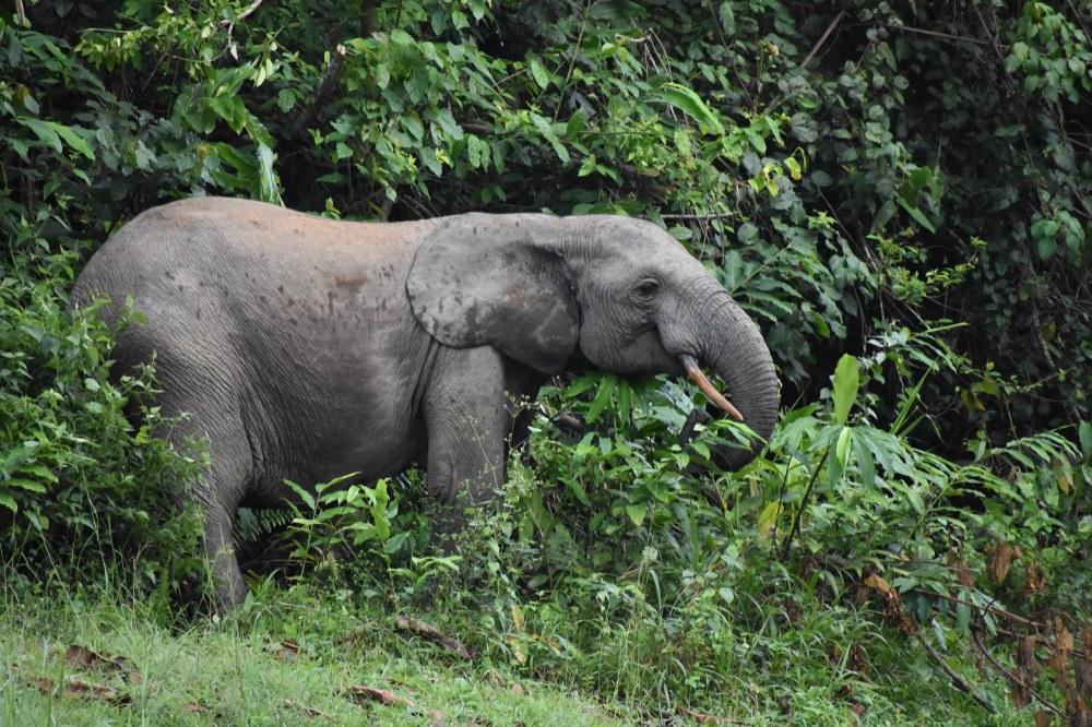 ELEPHANTS (3)