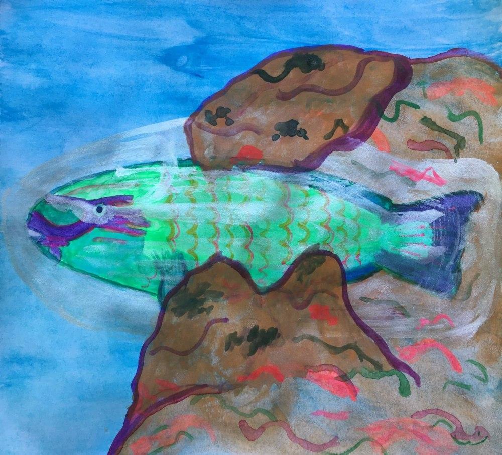 SS-KChudeau Parrotfish