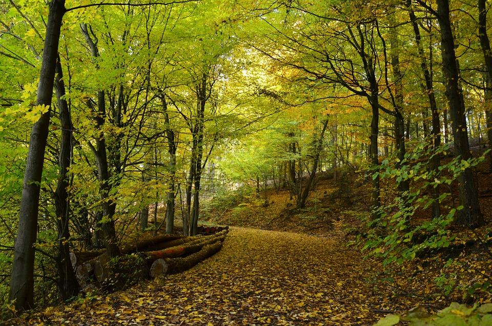 autumn-1007408_960_720