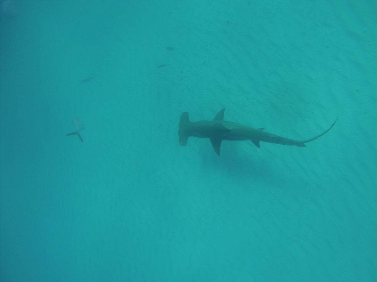 Sharks and Social Media: Managing Human-Wildlife Interactions in the Digital Age