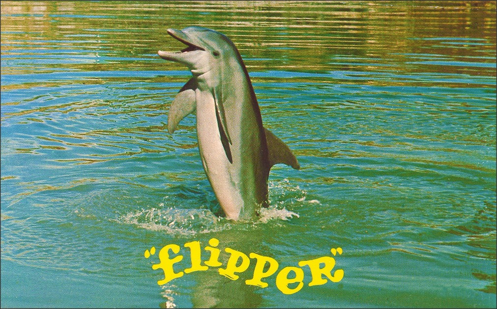 """A grey dolphin jumping out of the water vertically, with the yellow text below it reading """"flipper"""". The water is a blue-yellow color."""